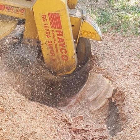 Next, we use a stump grinder to take out the bulk of the stump and rootball