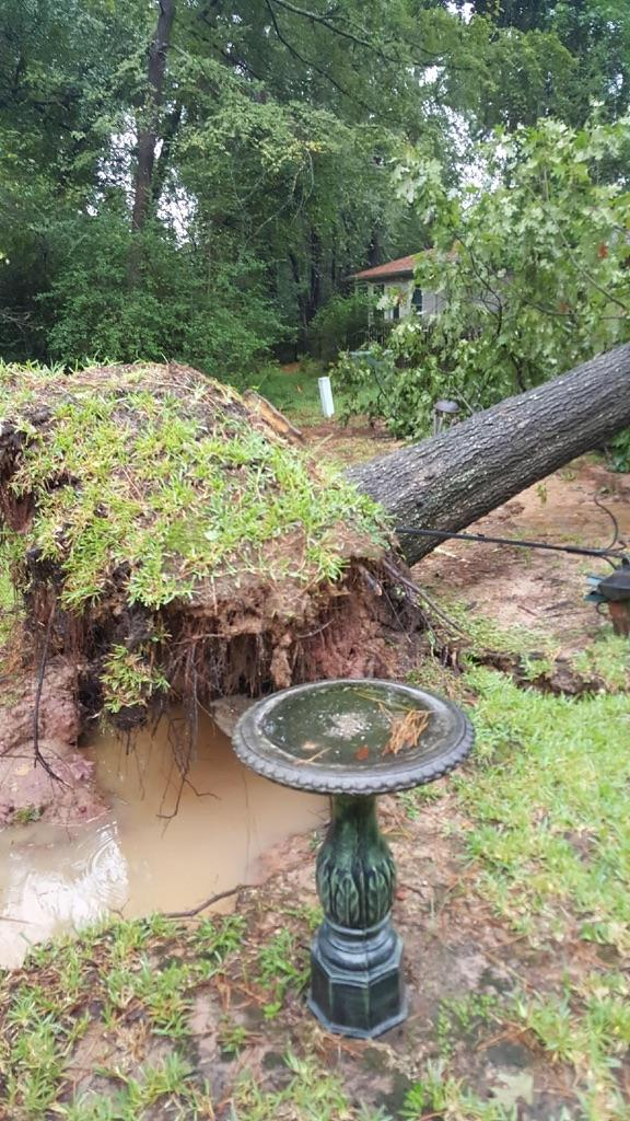 Hurricane Harvey uprooted several trees in Montgomery County, as can happen in extreme floods