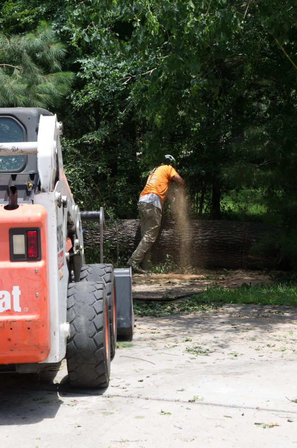 log trunk pine cutting saw