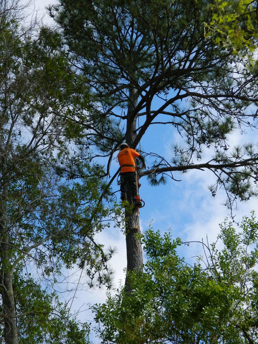 climbing trees in Kingwood, TX