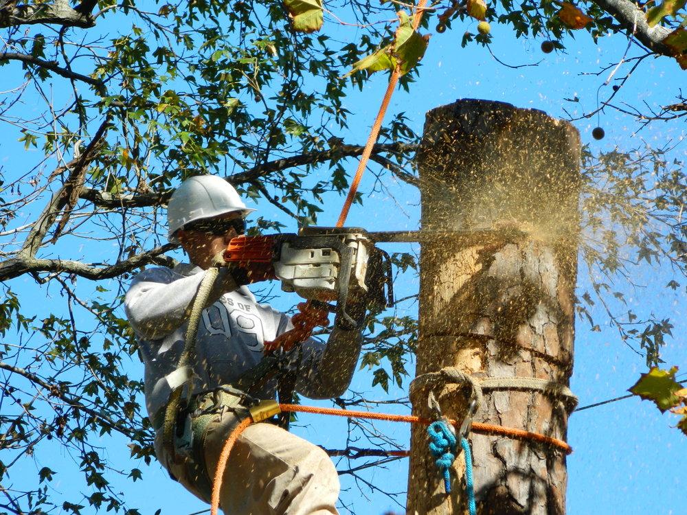 tree climber saw shavings ropes