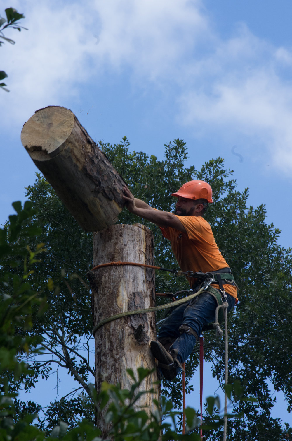 tree trunk cutting and removal in Magnolia, TX