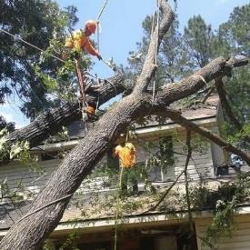 Emergency Tree fell Work hurricane flood roof