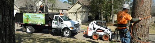 Rothco Tree Service - Rope climbing for a residential tree removal -  The Woodlands, TX