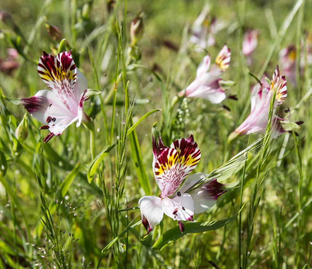 Flora del entorno