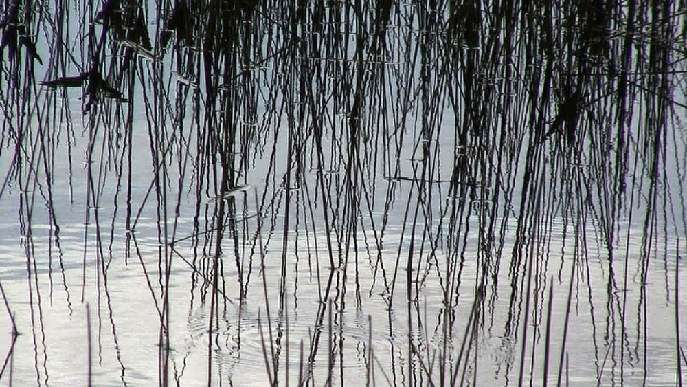 grass lake I