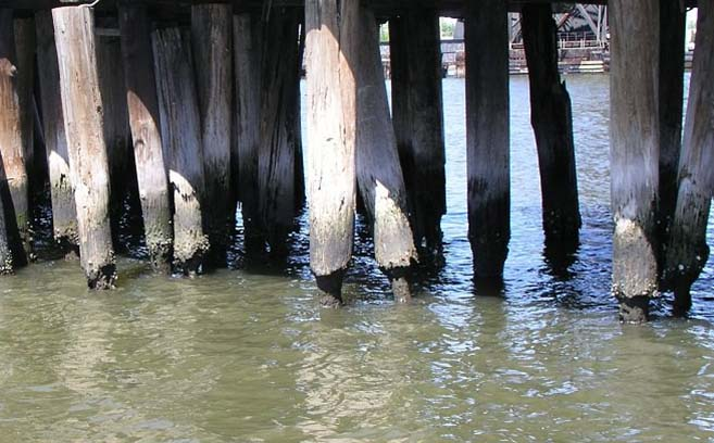Creosote treated wood piles in Norfolk Harbor.