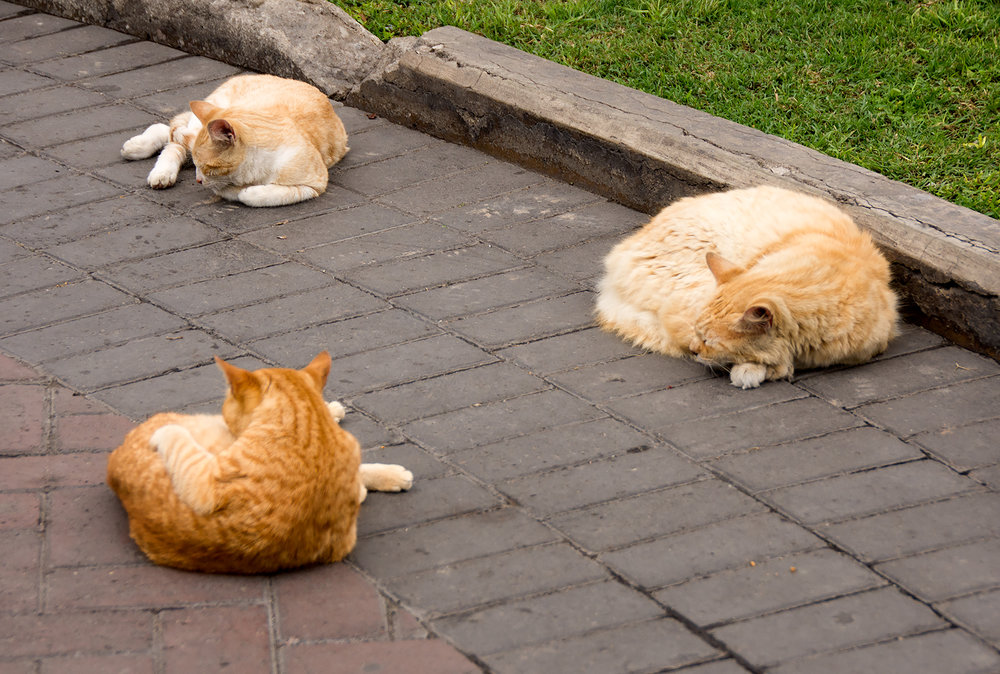 CatPark2.jpg