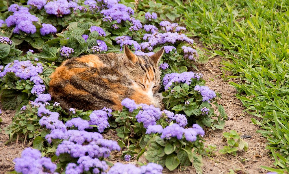 CatPark1.jpg