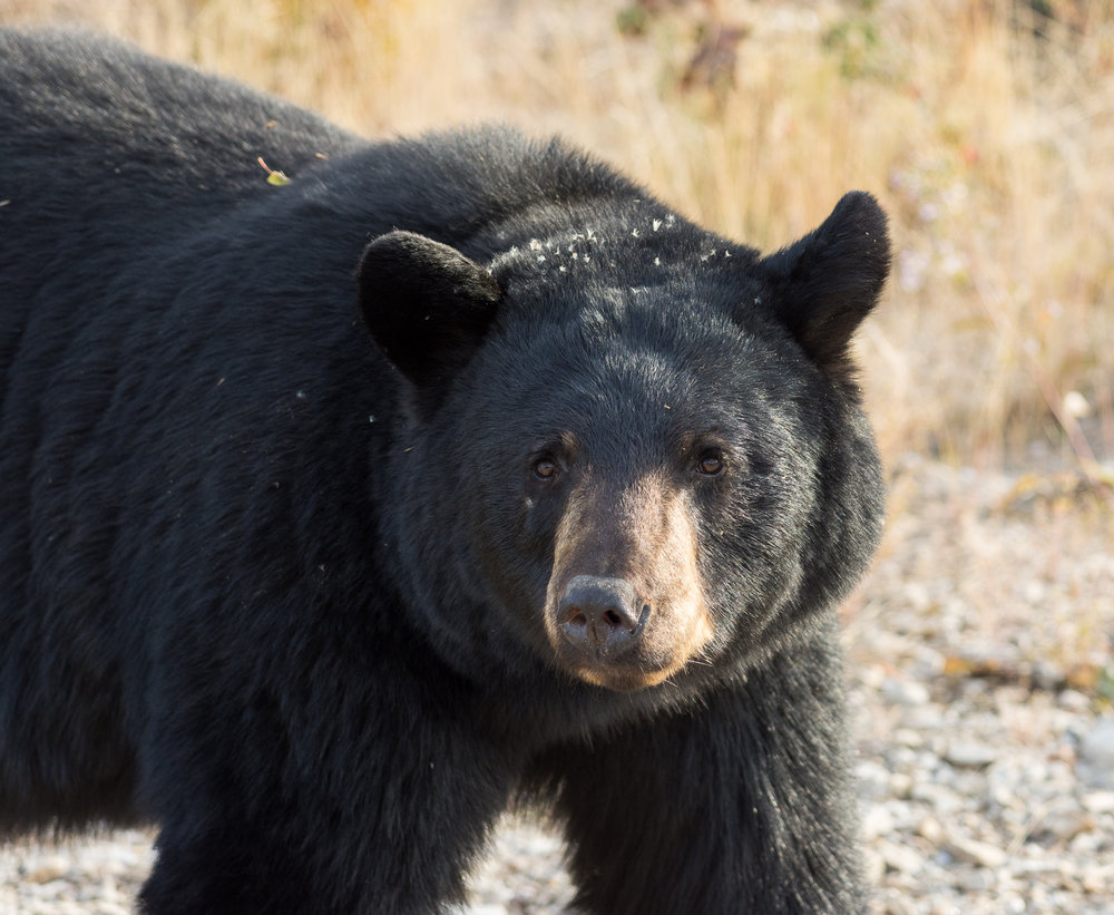 Filth Bear