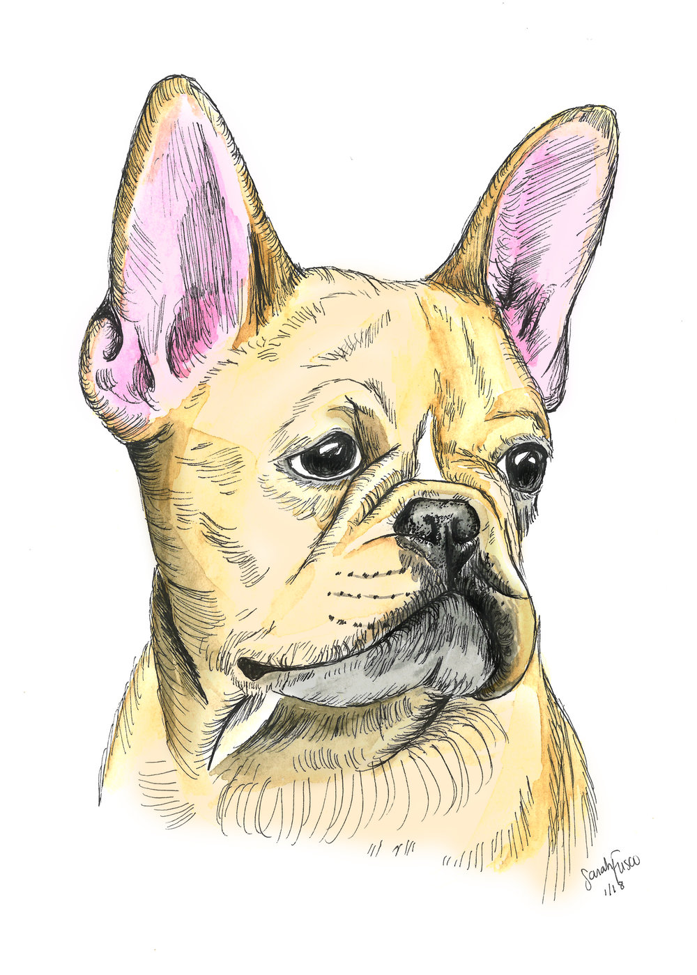 dog frenchie albatross insta 011618.jpg