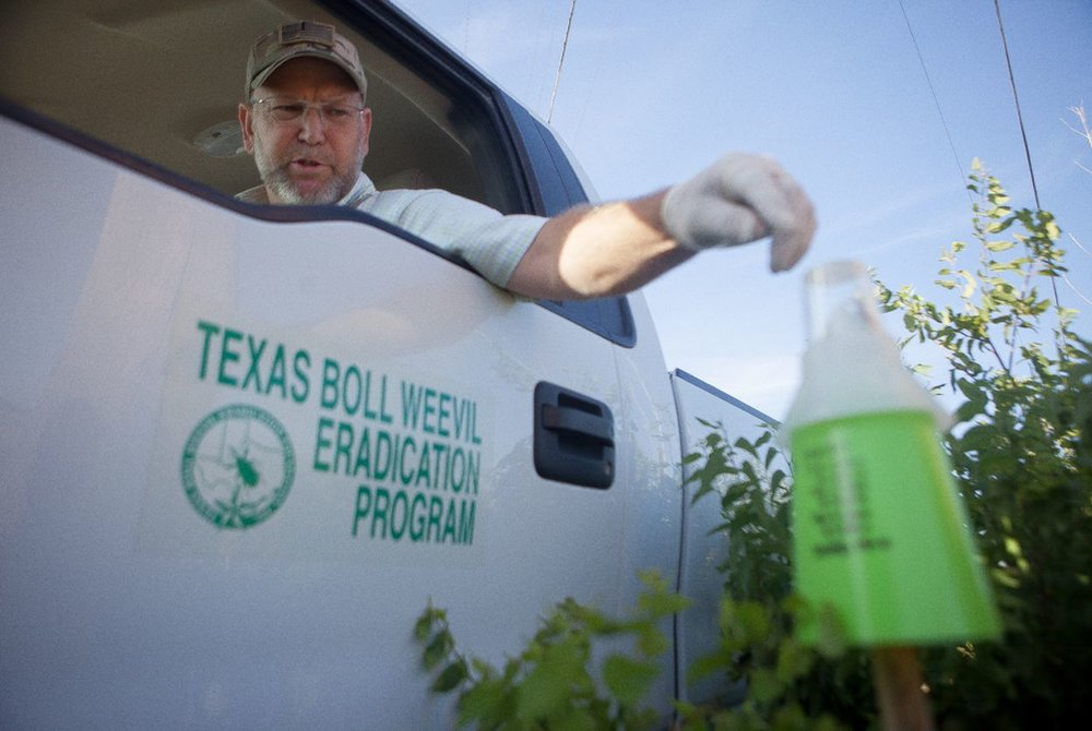 Fighting Pest, Farmers Find Strange Ally: A Drought ( The New York Times/Texas Tribune )