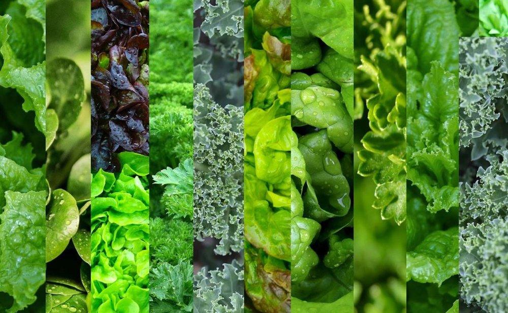 Mixed-Greens-2-1024x631.jpg