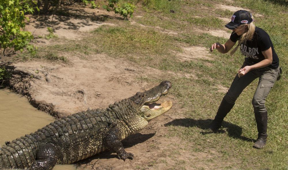 gator feeding.jpg