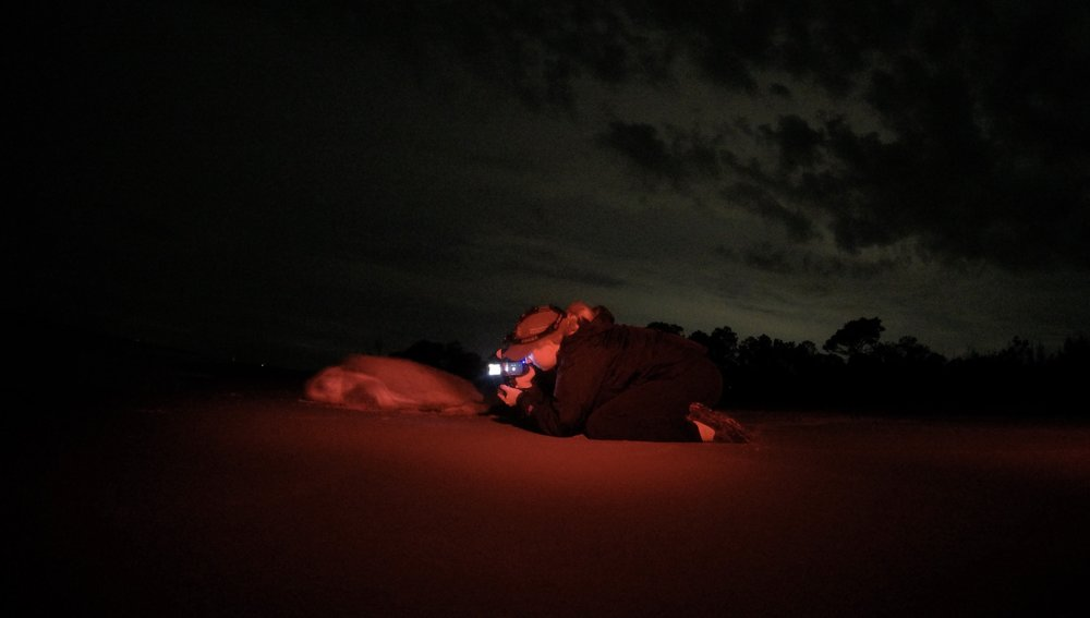 Bright, white light disorients nesting sea turtles, so infrared technology is used while filming and collecting data.