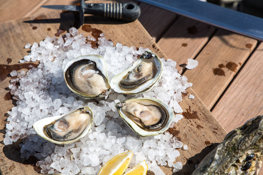 Pure History Oysters
