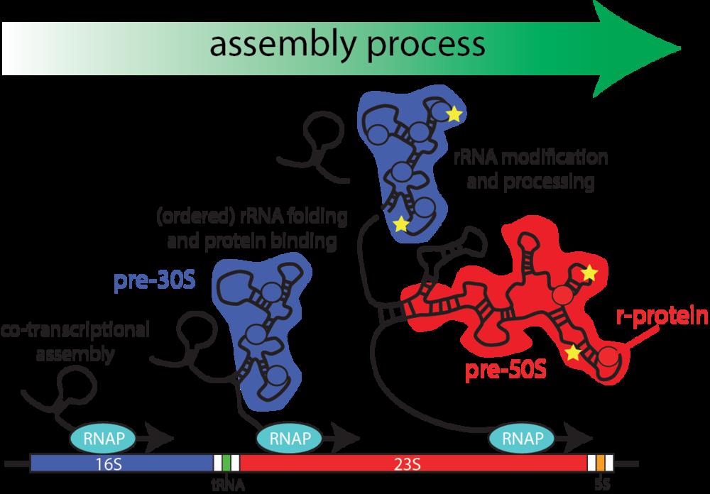biogenesis_schematic.png