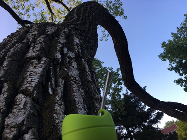 Where do you drink your yerba mate?