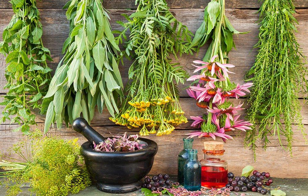 herbs-cold-flu-main-1000.jpg