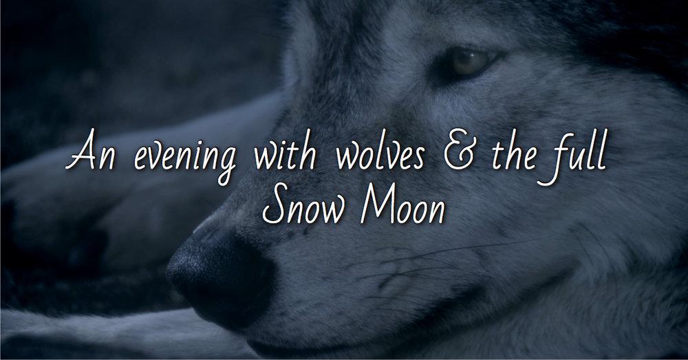Seasonal Habitat Series @ Wolf Sanctuary of PA - Saturday, February 16th @ 7:30pm - 10pm$20
