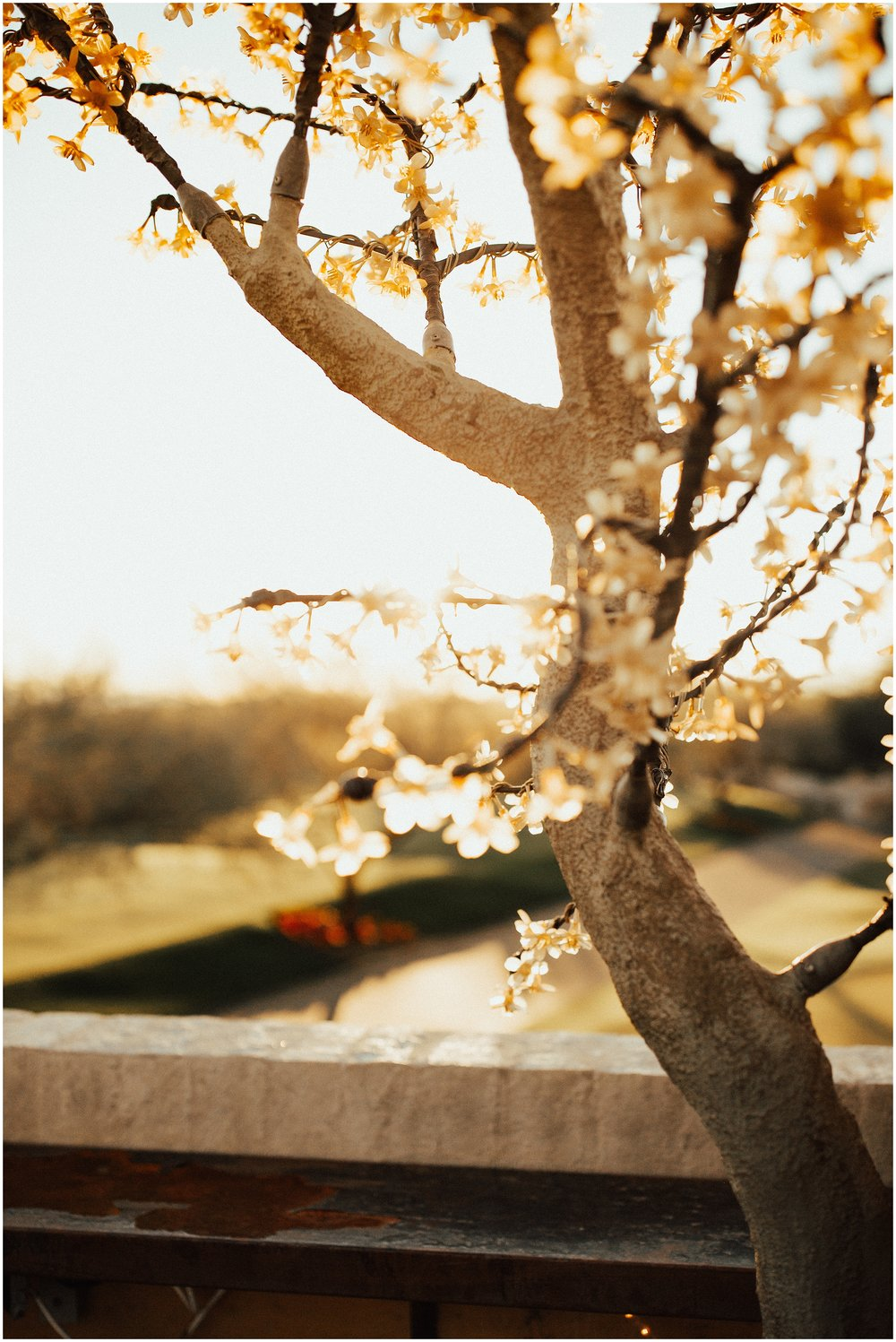 Scottsdale Wedding Photographer Cassie Trottier Photography-1172_.jpg
