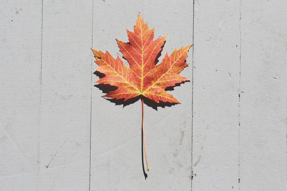 autumn-fall-leaf-33961.jpg