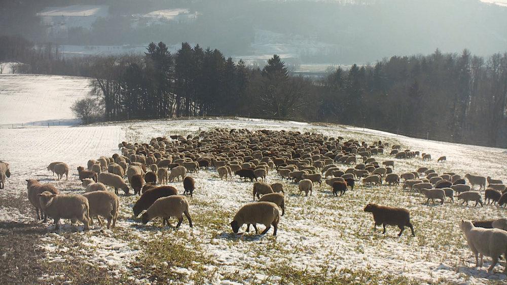 Réalisé par Manuel von Stürler    hiver nomade    La fiche du film