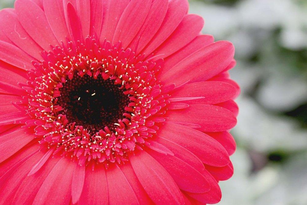 protection-of-pollinators-compressor-1024x683.jpg