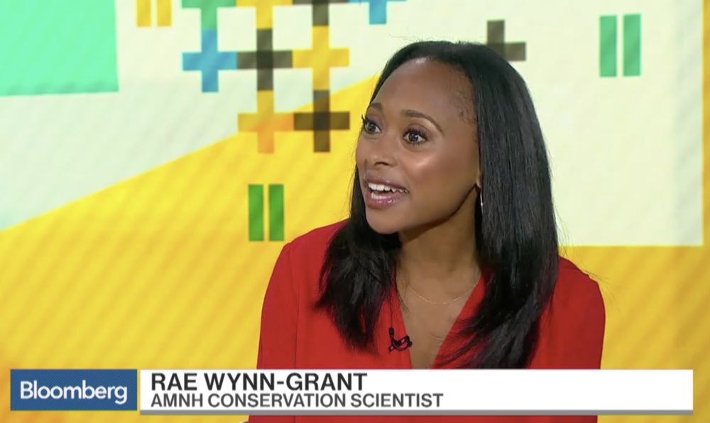 Bloomberg TV August 2018:  Dr. Wynn-Grant speaks with Scarlet Fu of Bloomberg Business on the importance of racial diversity for conservation institutions to achieve success