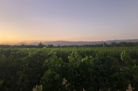 Astra-Blog-Savannah-Part4-Vineyards-Sunset.jpg