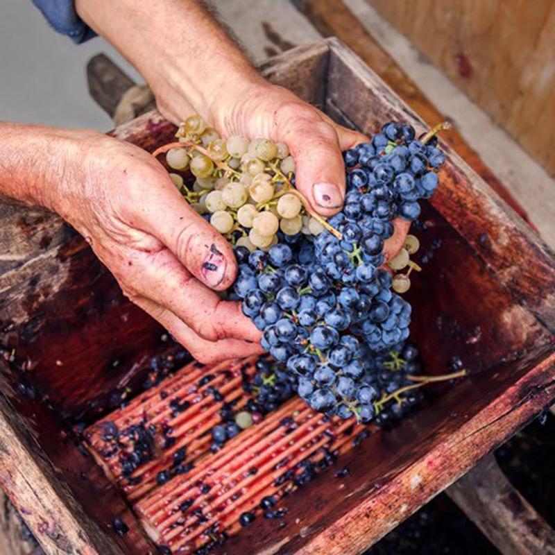Bacchus Winemaking Club