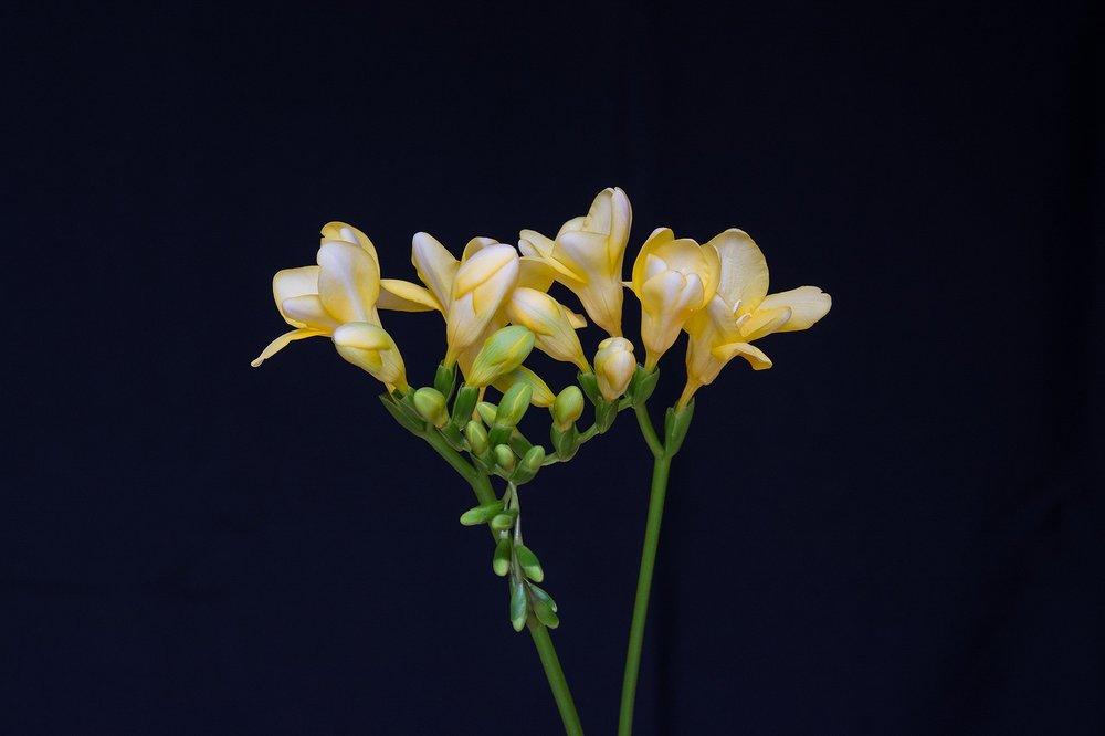 flowers-1766563_1920.jpg