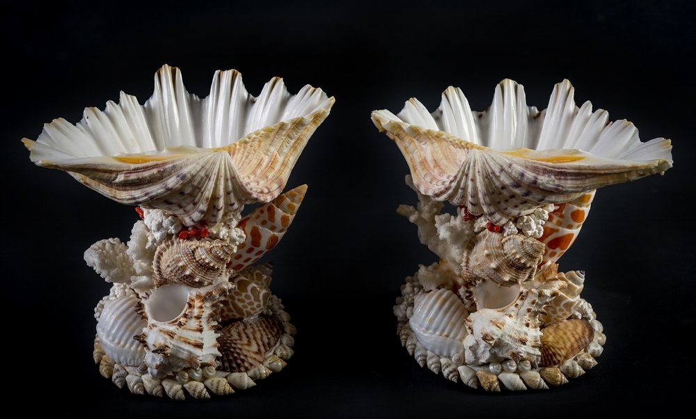 Pair of  Tazzas   A pair of sweetmeat holders made from a single clam shell, each supported by an arrangement of various shells including orange mitres and red polished antique coral. 12cm x15cm