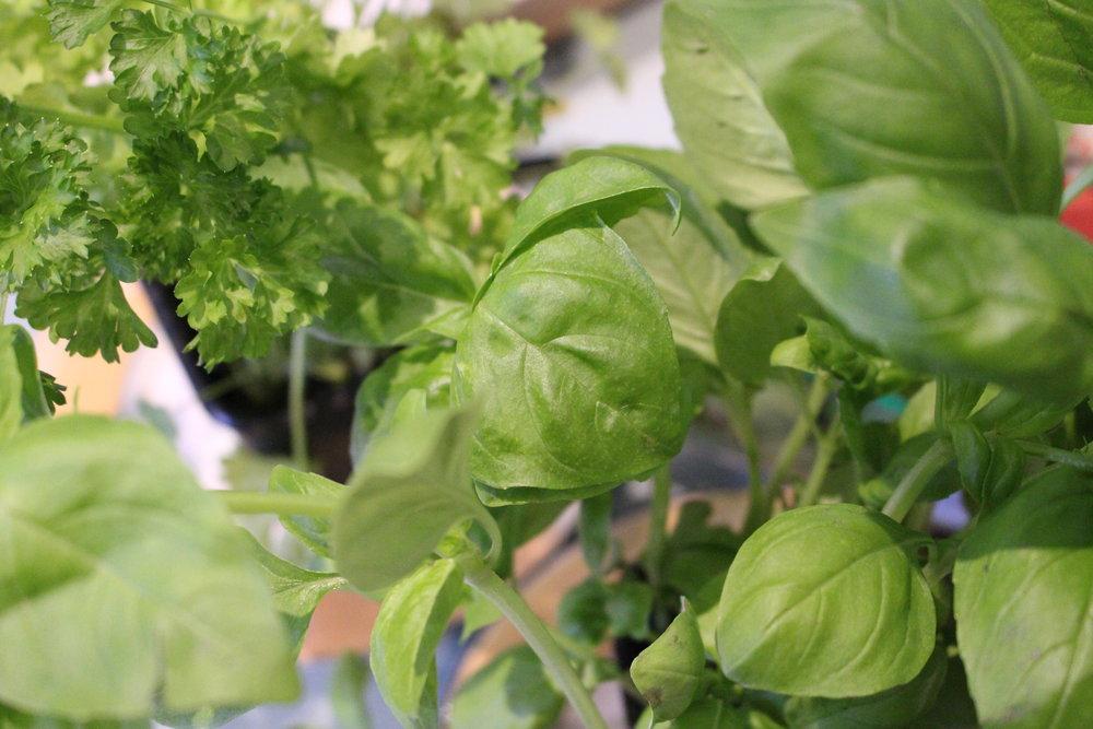 Vegan Olive Tapenade — Franc and Lil\'s Garden Cafe