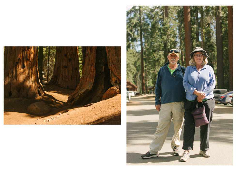 Sequoia Trees and old Couple