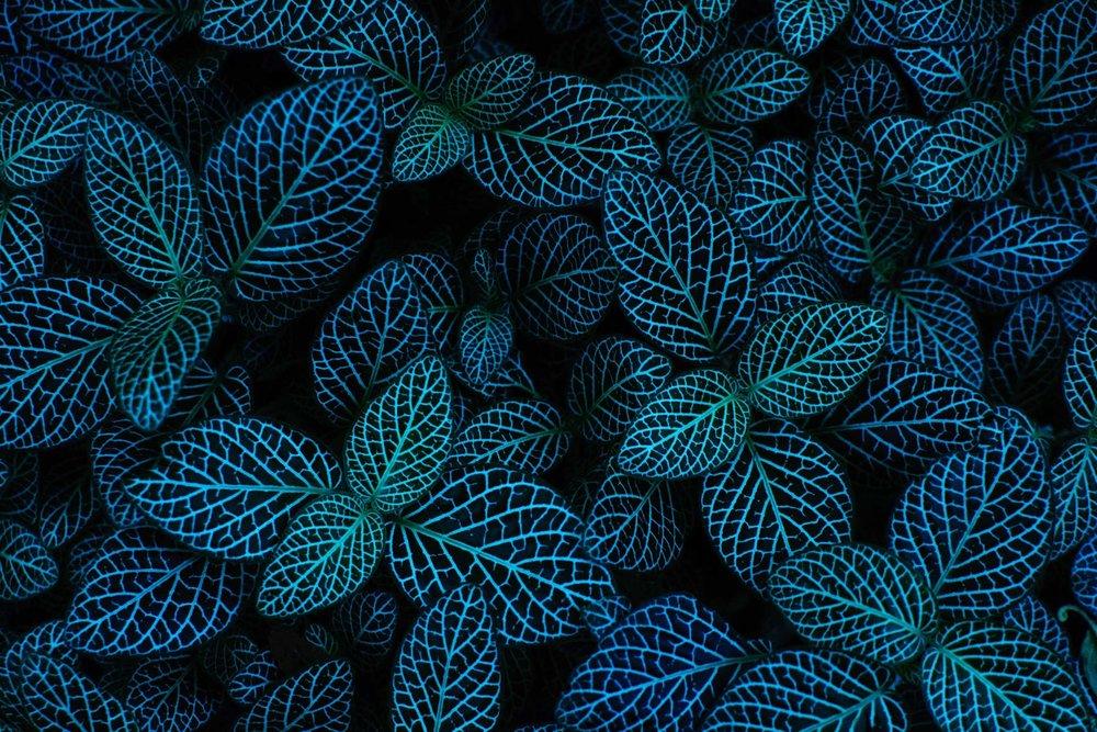 Psychodelic Leaves