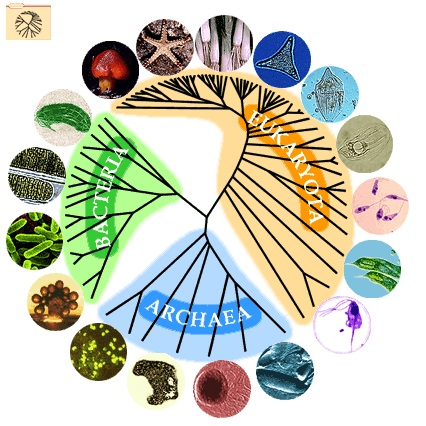 EVOLUTION, PHYLOGENETIC TREES, AND YOUNGER AUDIENCES.png