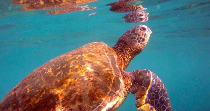 sea turtle 04