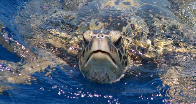 sea turtle 03