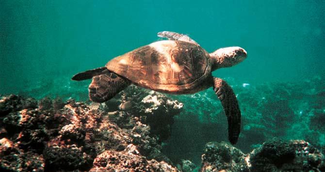 sea-turtle-01
