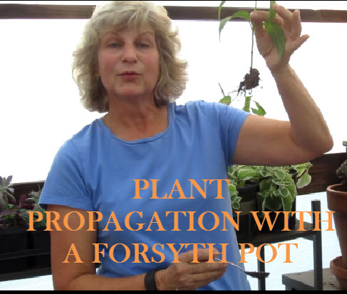 YouTube Thumbnail-Forsyth Pot.jpg