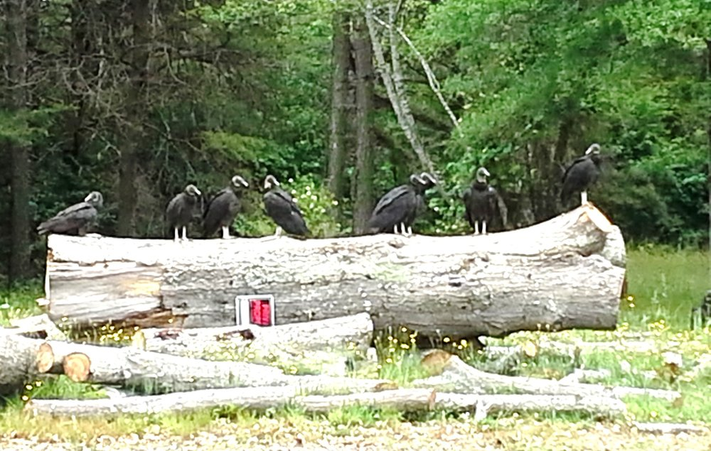 A committee of buzzards