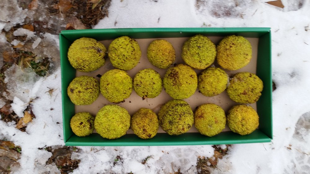 Box of assorted sizes, gathered after the first snowfall