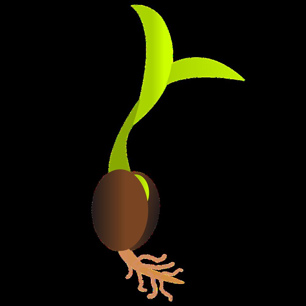 seedling.png