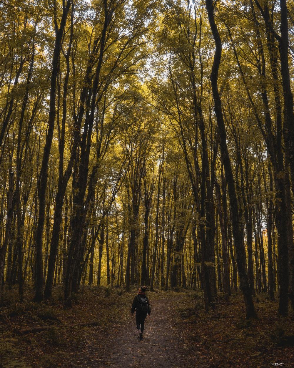 sav hiking final.jpg