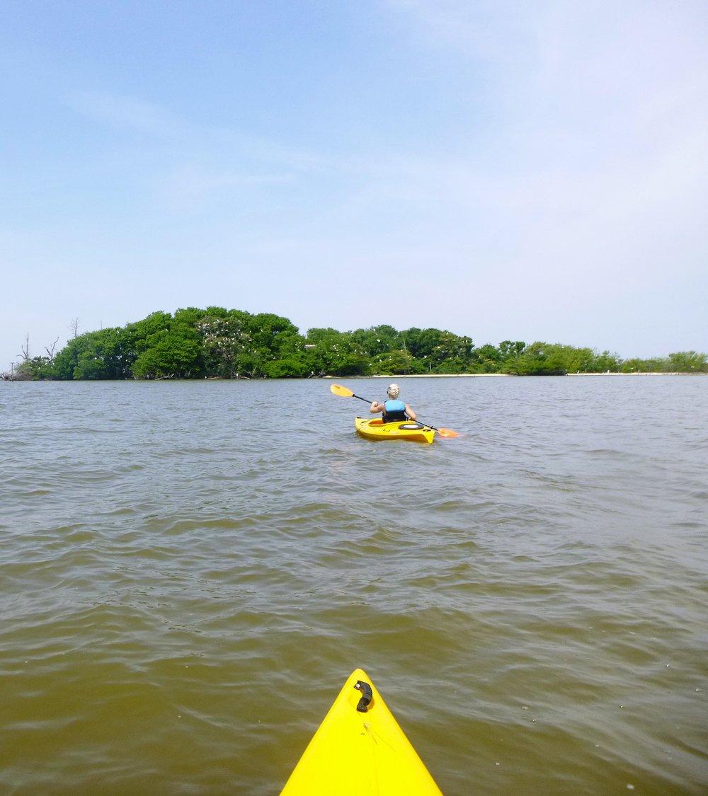 Monkey Island Kayak Tour Corolla.JPG