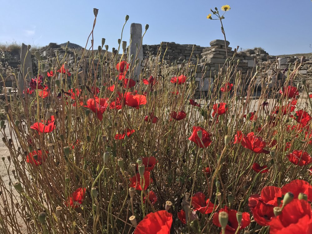 Delos Poppies
