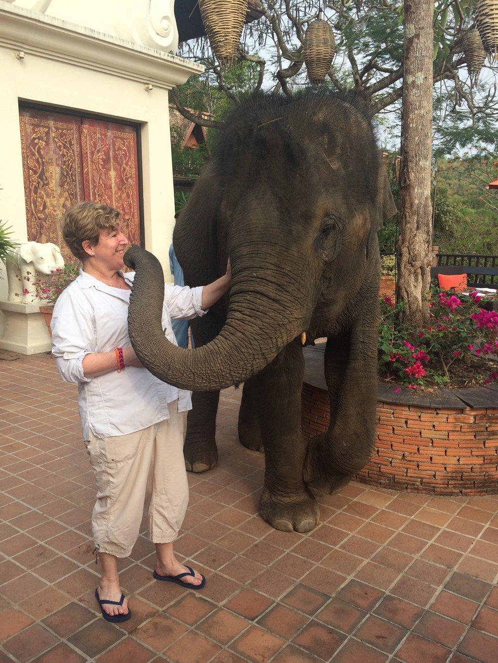 Breakfast with elephant