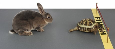 tortise and hare.jpg