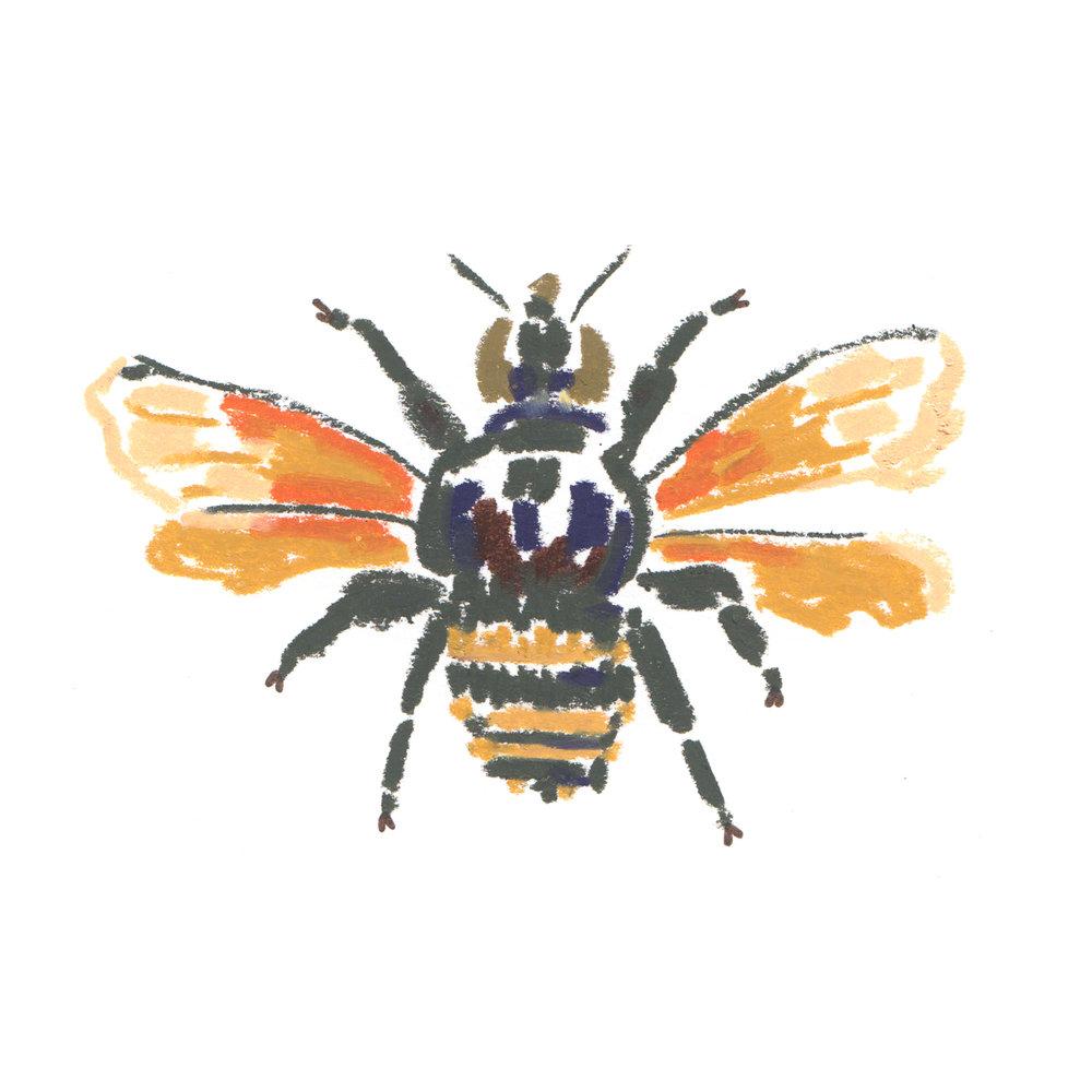 Bee Eulaema meriana South America.jpg